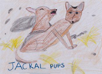 Jayla Cataldi Age 11, 101 Animal Babies (Jackal Pups)